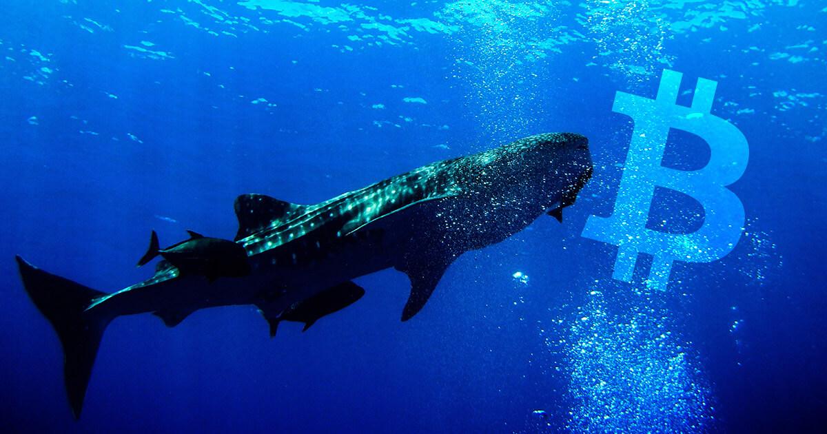 bitcoin balinasından blok ödülü yarılanması açıklaması